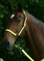 Head Collar and Leadrope Set