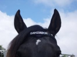 Personalised Browband with Chrome Letters