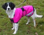 Hi-Vis Waterproof Dog Coat